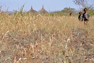droogte Ethiopië