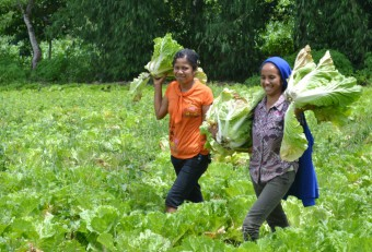 Farming groups in Indonesie