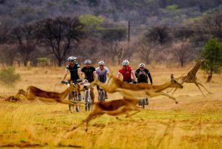 Cycle zambia
