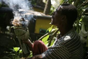 Honing Ethiopie
