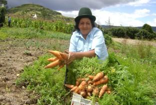 microfinancieringsproject paraguay